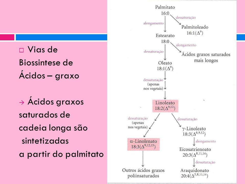 Vias de Biossintese de Ácidos – graxo Ácidos graxos saturados de cadeia longa são sintetizadas a partir do palmitato