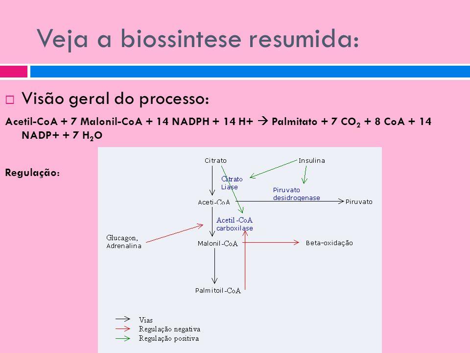 Veja a biossintese resumida: Visão geral do processo: Acetil-CoA + 7 Malonil-CoA + 14 NADPH + 14 H+ Palmitato + 7 CO 2 + 8 CoA + 14 NADP+ + 7 H 2 O Re