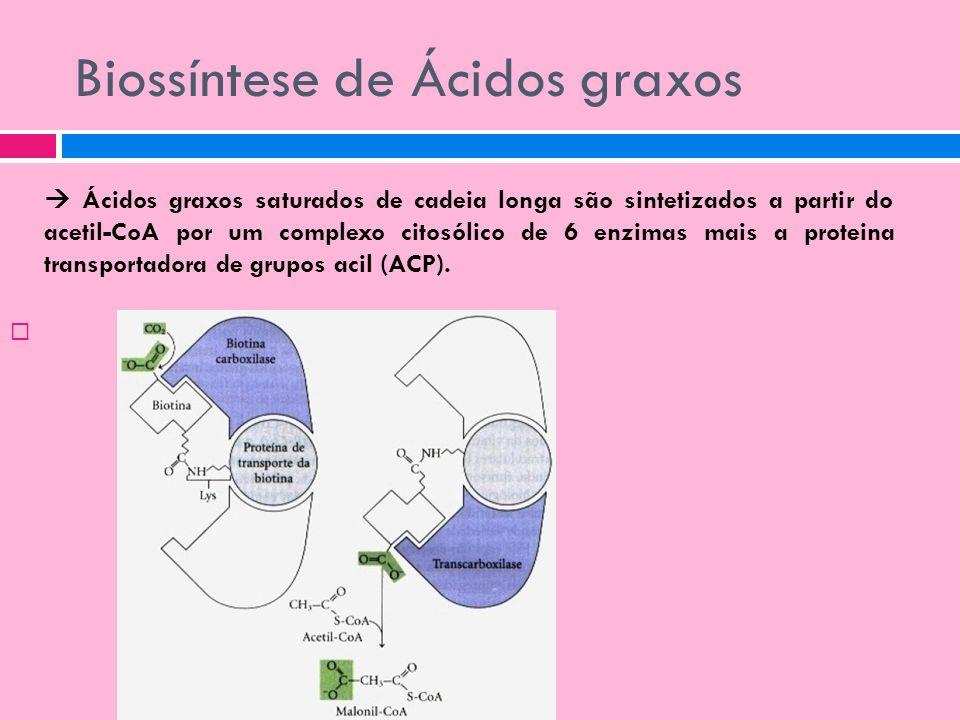 Biossíntese de Ácidos graxos Ácidos graxos saturados de cadeia longa são sintetizados a partir do acetil-CoA por um complexo citosólico de 6 enzimas m