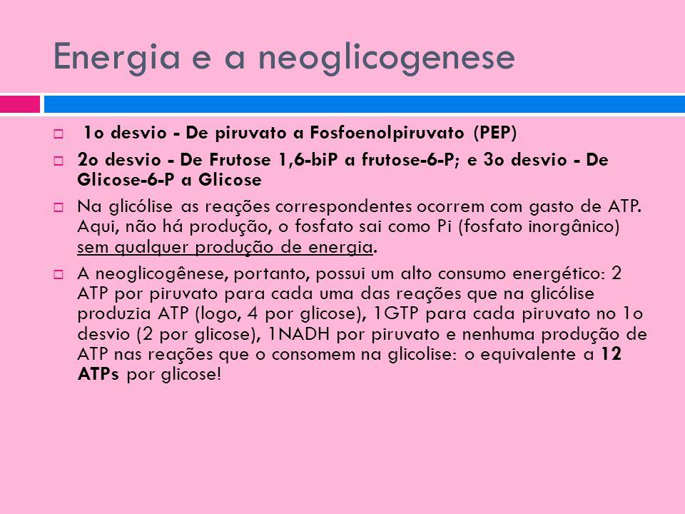 Energia e a neoglicogenese 1o desvio - De piruvato a Fosfoenolpiruvato (PEP) 2o desvio - De Frutose 1,6-biP a frutose-6-P; e 3o desvio - De Glicose-6-
