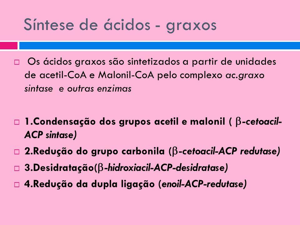 Síntese de ácidos - graxos Os ácidos graxos são sintetizados a partir de unidades de acetil-CoA e Malonil-CoA pelo complexo ac.graxo sintase e outras