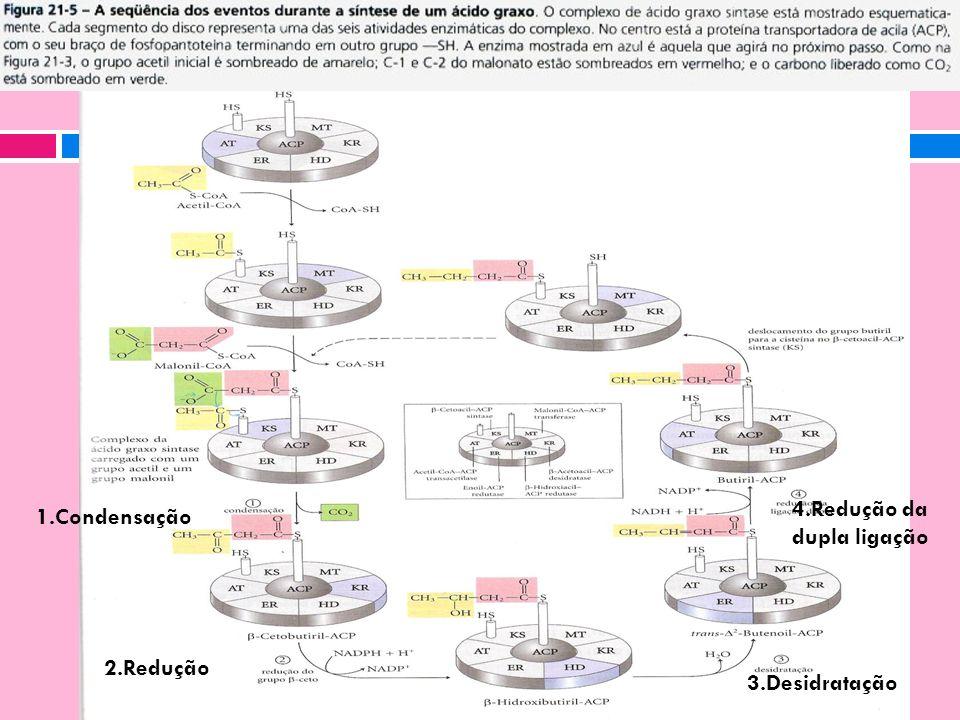 1.Condensação 2.Redução 3.Desidratação 4.Redução da dupla ligação