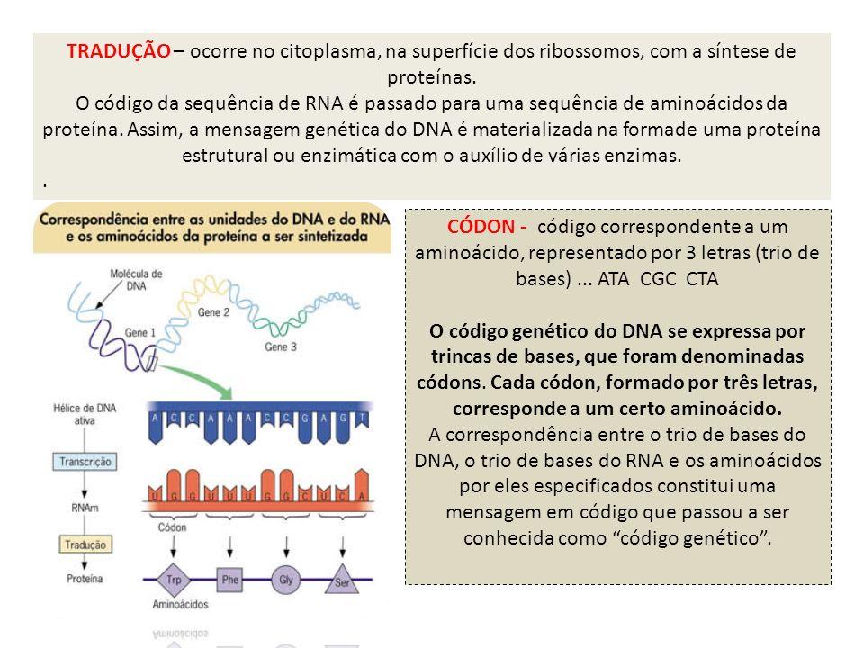 TRADUÇÃO – ocorre no citoplasma, na superfície dos ribossomos, com a síntese de proteínas.