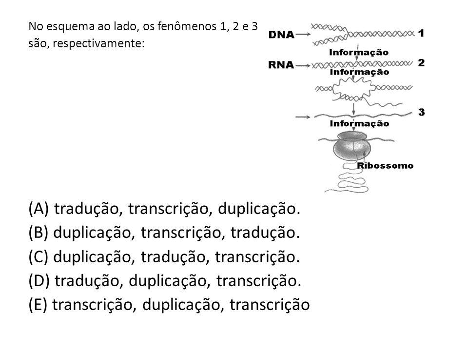 No esquema ao lado, os fenômenos 1, 2 e 3 são, respectivamente: (A) tradução, transcrição, duplicação.