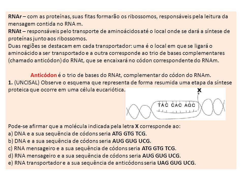 RNAr – com as proteínas, suas fitas formarão os ribossomos, responsáveis pela leitura da mensagem contida no RNA m.