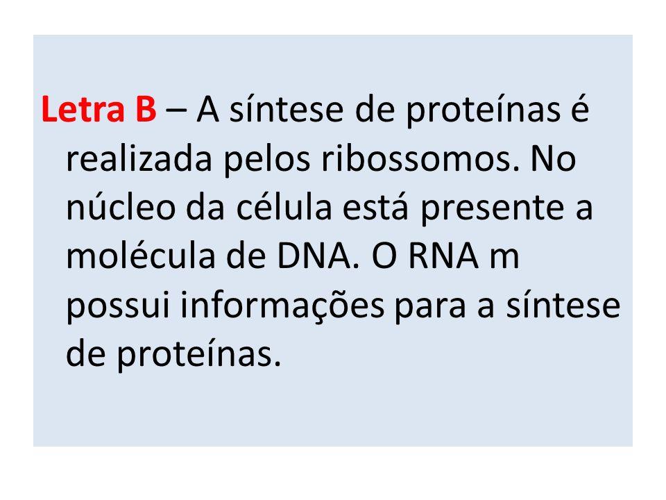 Letra B – A síntese de proteínas é realizada pelos ribossomos.