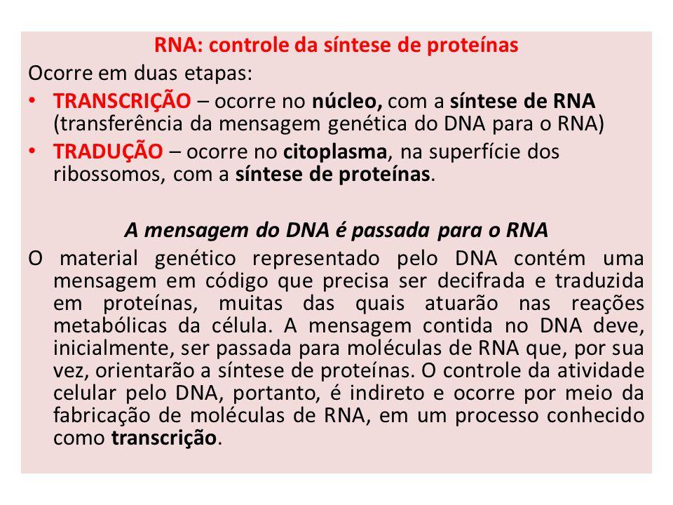 RNA: controle da síntese de proteínas Ocorre em duas etapas: TRANSCRIÇÃO – ocorre no núcleo, com a síntese de RNA (transferência da mensagem genética do DNA para o RNA) TRADUÇÃO – ocorre no citoplasma, na superfície dos ribossomos, com a síntese de proteínas.