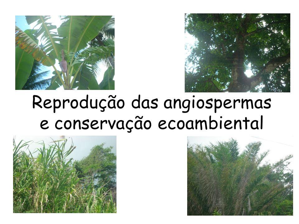 Reprodução das angiospermas e conservação ecoambiental