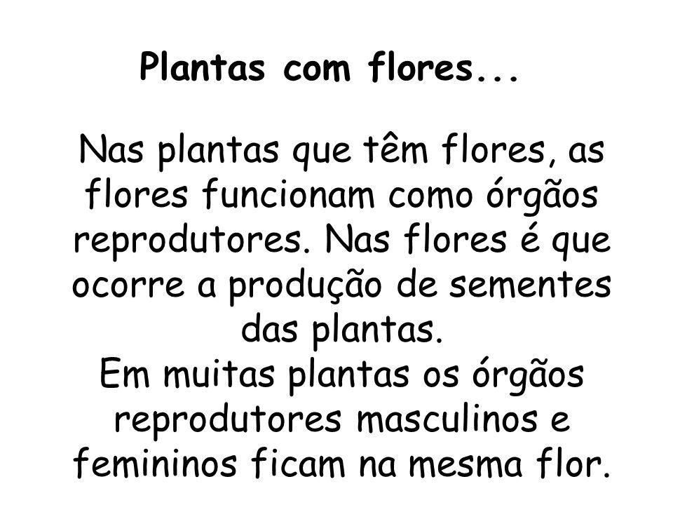 Nas plantas que têm flores, as flores funcionam como órgãos reprodutores. Nas flores é que ocorre a produção de sementes das plantas. Em muitas planta
