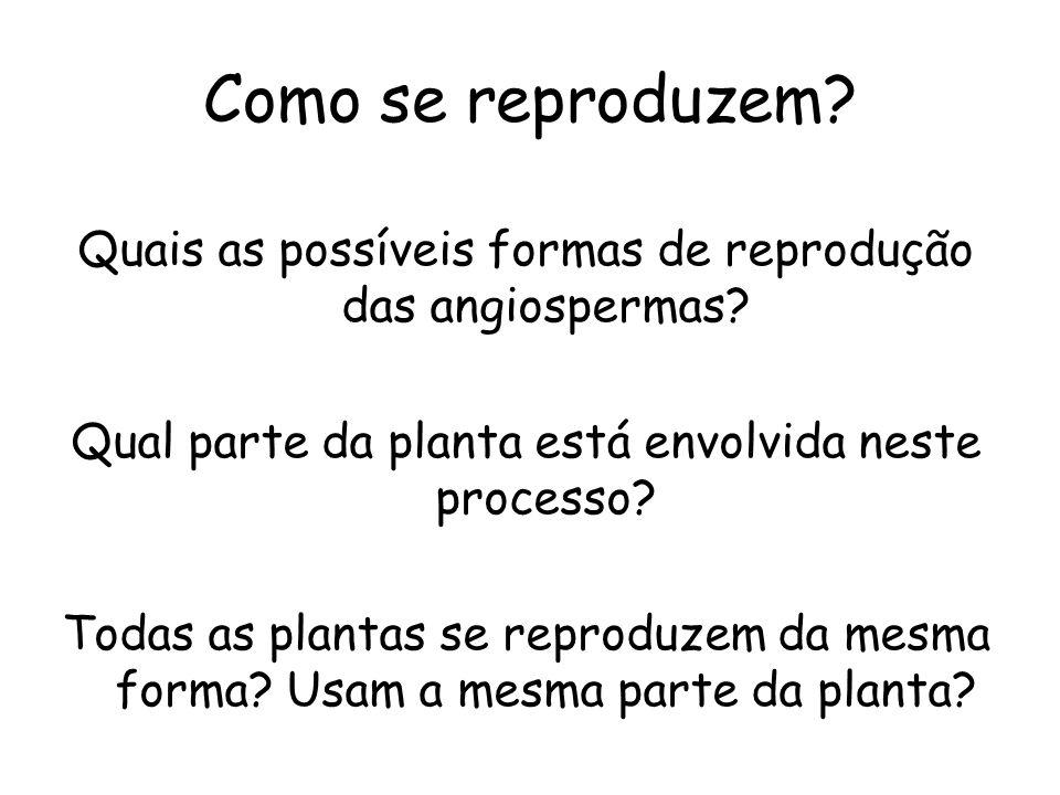 Como se reproduzem? Quais as possíveis formas de reprodução das angiospermas? Qual parte da planta está envolvida neste processo? Todas as plantas se