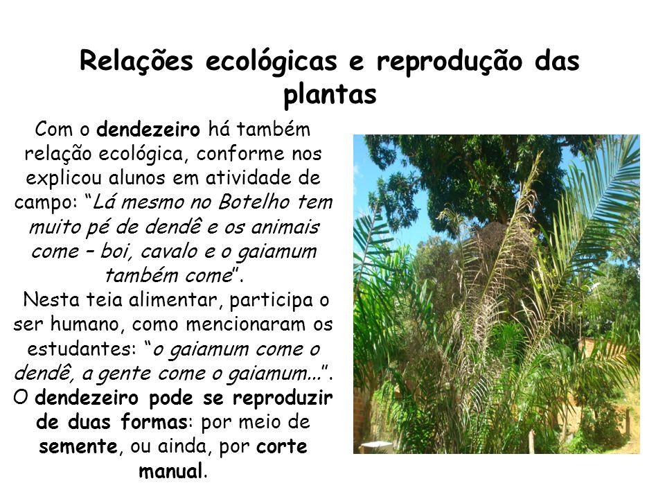 Relações ecológicas e reprodução das plantas Com o dendezeiro há também relação ecológica, conforme nos explicou alunos em atividade de campo: Lá mesm