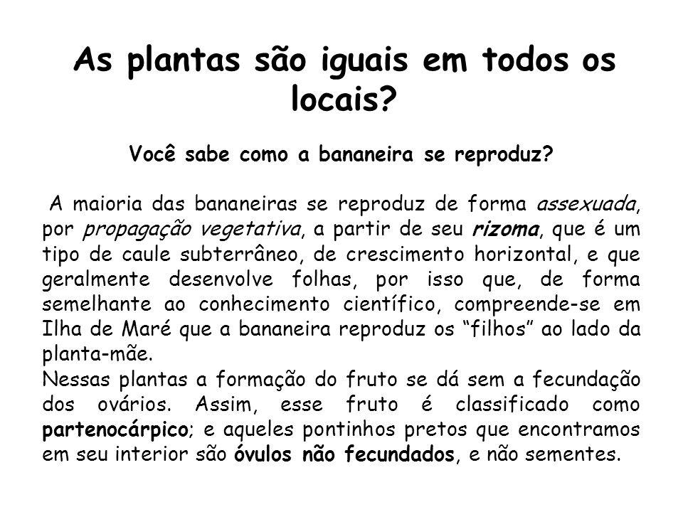As plantas são iguais em todos os locais? Você sabe como a bananeira se reproduz? A maioria das bananeiras se reproduz de forma assexuada, por propaga