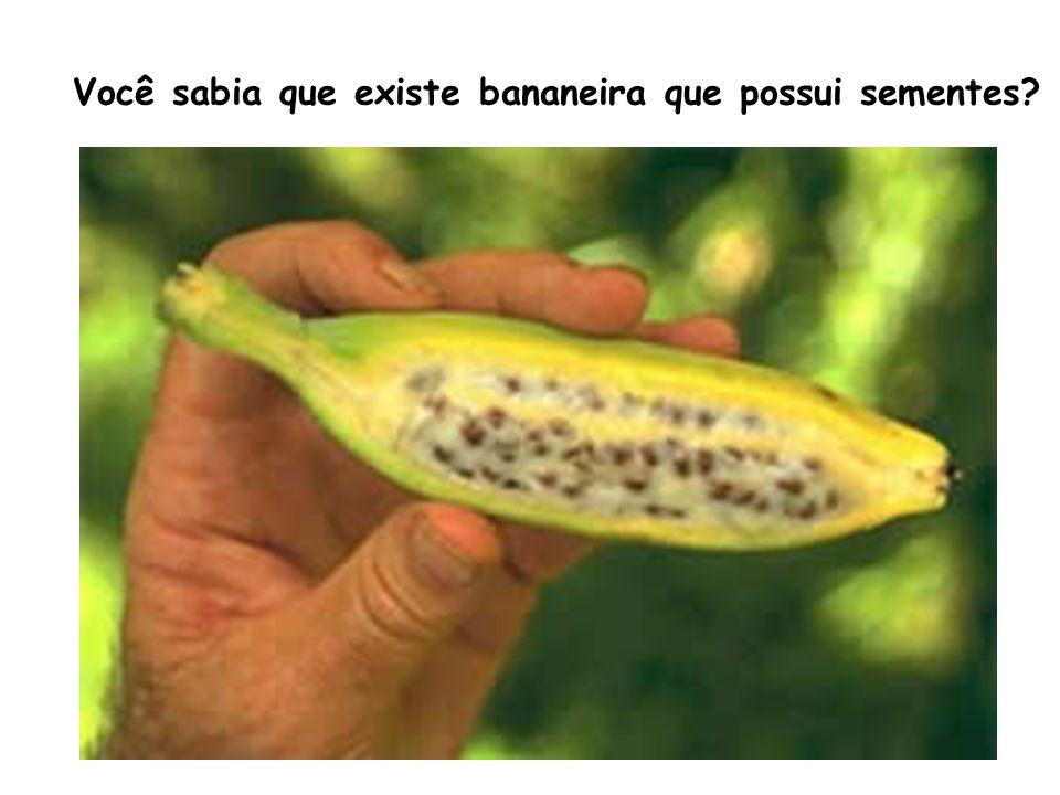 Você sabia que existe bananeira que possui sementes?