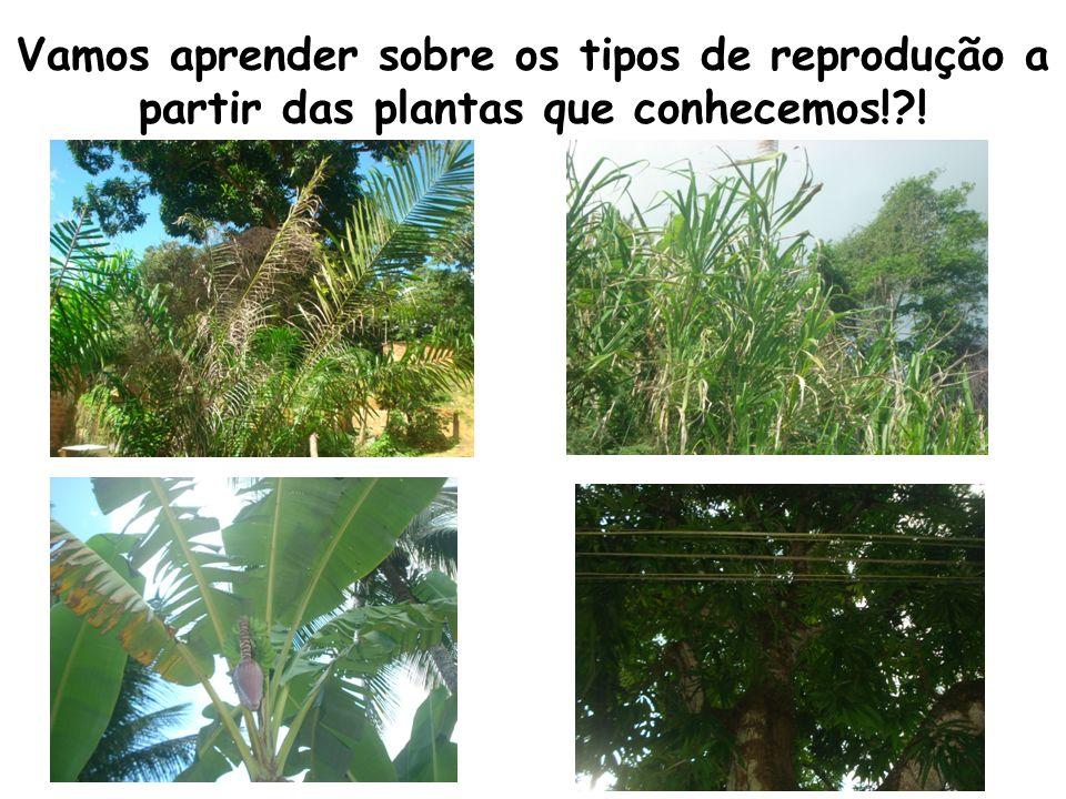 Em outras plantas, como a cana brava os órgãos reprodutores masculinos e femininos ficam em inflorescências diferentes.