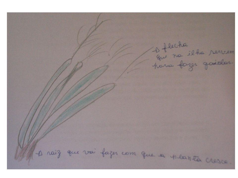 As pessoas podem provocar a propagação da cana brava enterrando em outro lugar um pedaço do colmo (caule aéreo) com gemas ou do rizoma (caule subterrâneo).