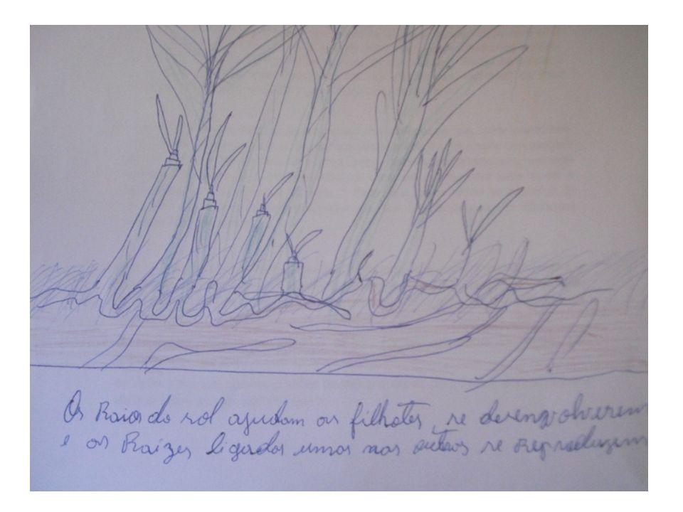 A cana brava tolera uma grande variedade de condições, incluindo a alta salinidade, o que explica também a grande quantidade desta planta na Ilha de Maré.
