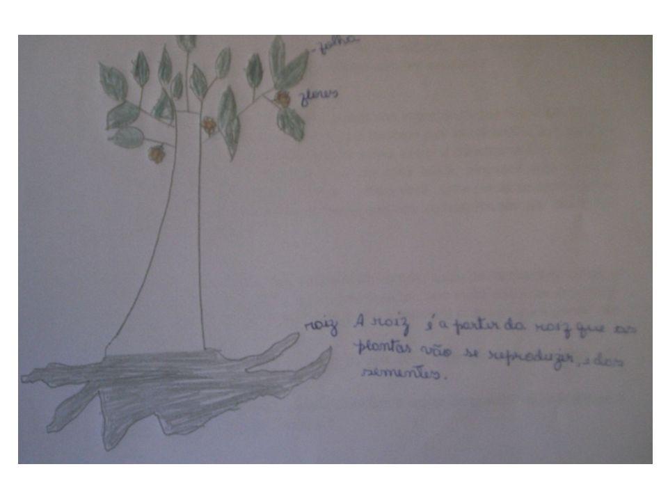 As sementes da cana brava são propagadas pelo vento e pela água, mas poucas germinam.