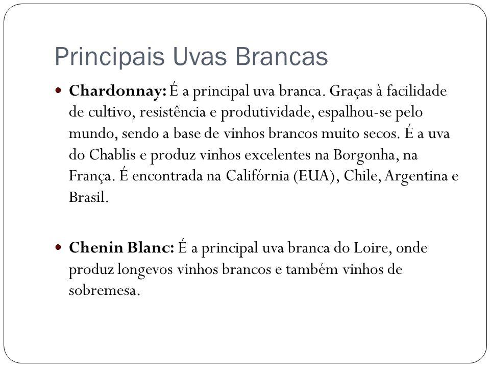 Principais Uvas Brancas Chardonnay: É a principal uva branca. Graças à facilidade de cultivo, resistência e produtividade, espalhou-se pelo mundo, sen