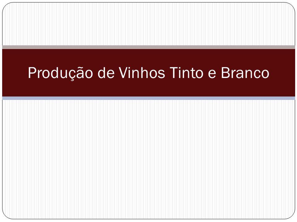 Produção de Vinhos Tinto e Branco