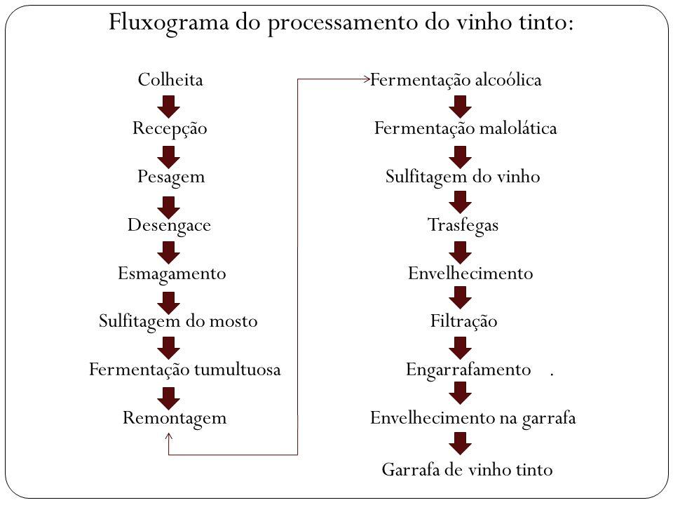 Fluxograma do processamento do vinho tinto: Colheita Fermentação alcoólica Recepção Fermentação malolática Pesagem Sulfitagem do vinho Desengace Trasf