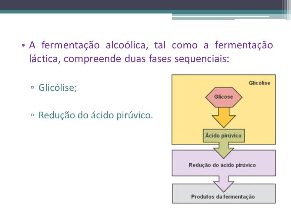A fermentação alcoólica, tal como a fermentação láctica, compreende duas fases sequenciais: Glicólise; Redução do ácido pirúvico.