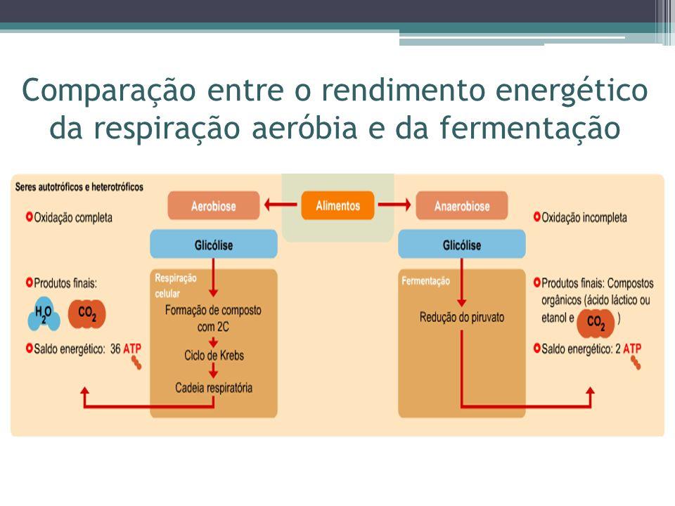 Comparação entre o rendimento energético da respiração aeróbia e da fermentação