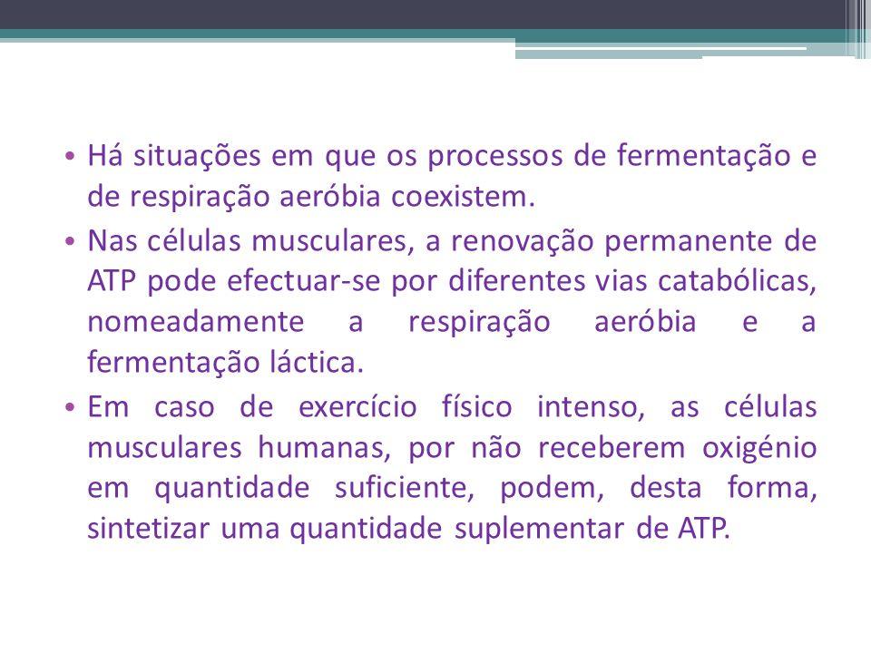 Há situações em que os processos de fermentação e de respiração aeróbia coexistem.