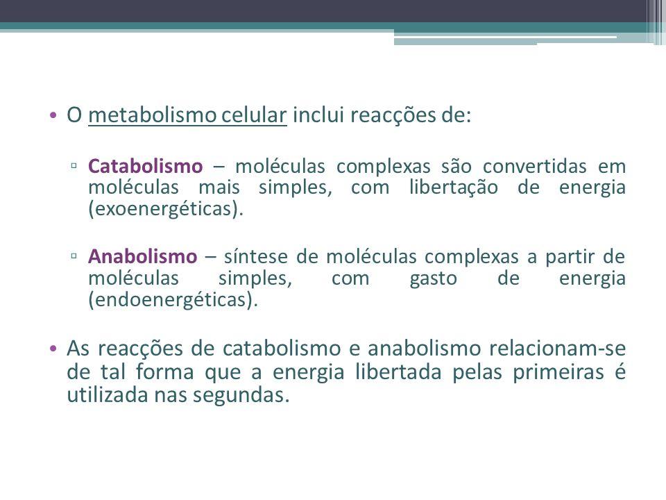 O metabolismo celular inclui reacções de: Catabolismo – moléculas complexas são convertidas em moléculas mais simples, com libertação de energia (exoenergéticas).