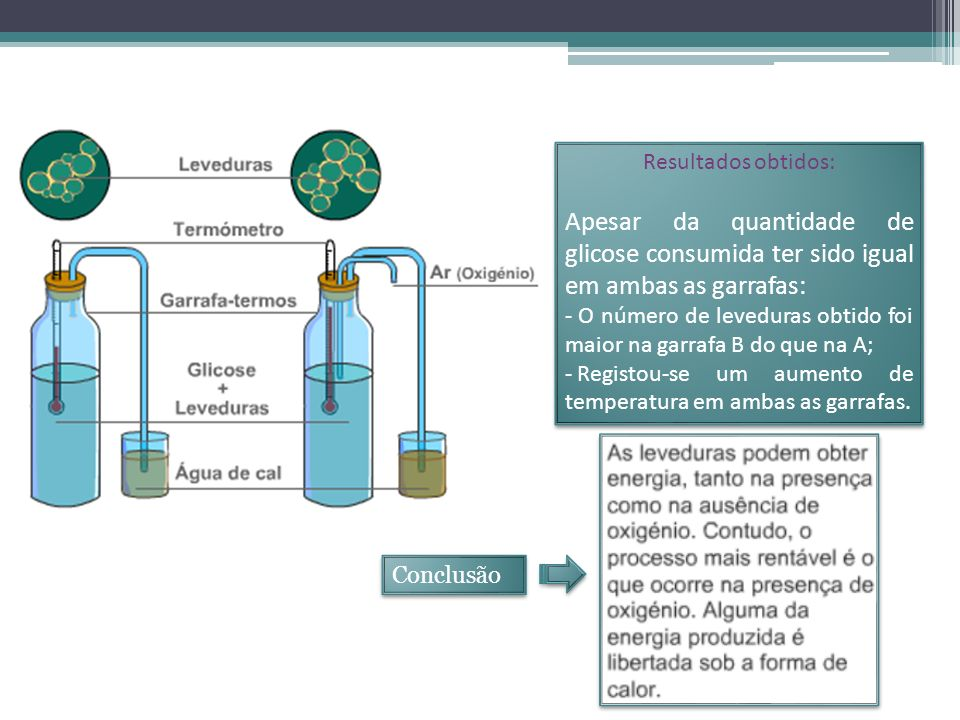 Resultados obtidos: Apesar da quantidade de glicose consumida ter sido igual em ambas as garrafas: - O número de leveduras obtido foi maior na garrafa B do que na A; - Registou-se um aumento de temperatura em ambas as garrafas.