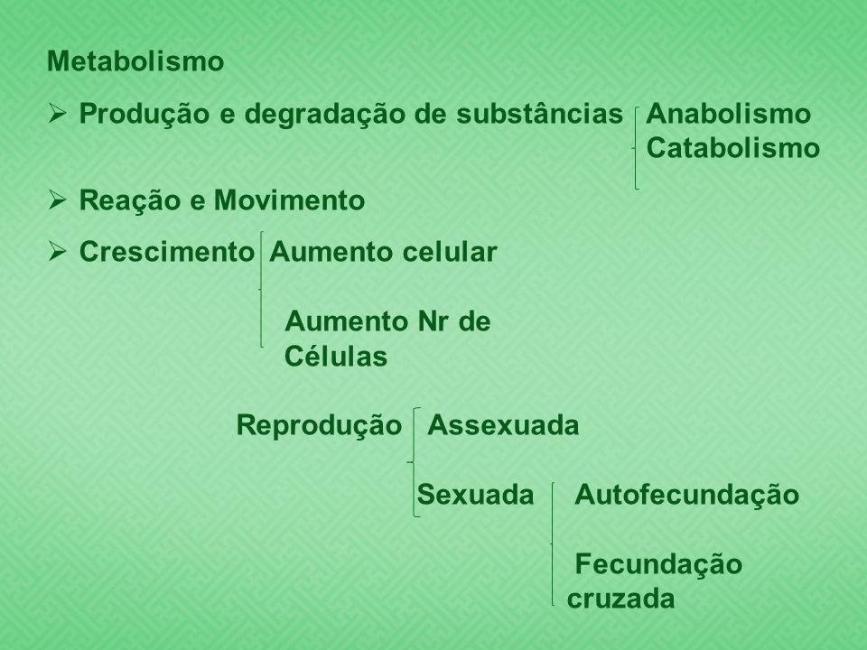 Metabolismo Produção e degradação de substâncias Anabolismo Catabolismo Reação e Movimento Crescimento Aumento celular Aumento Nr de Células Reproduçã