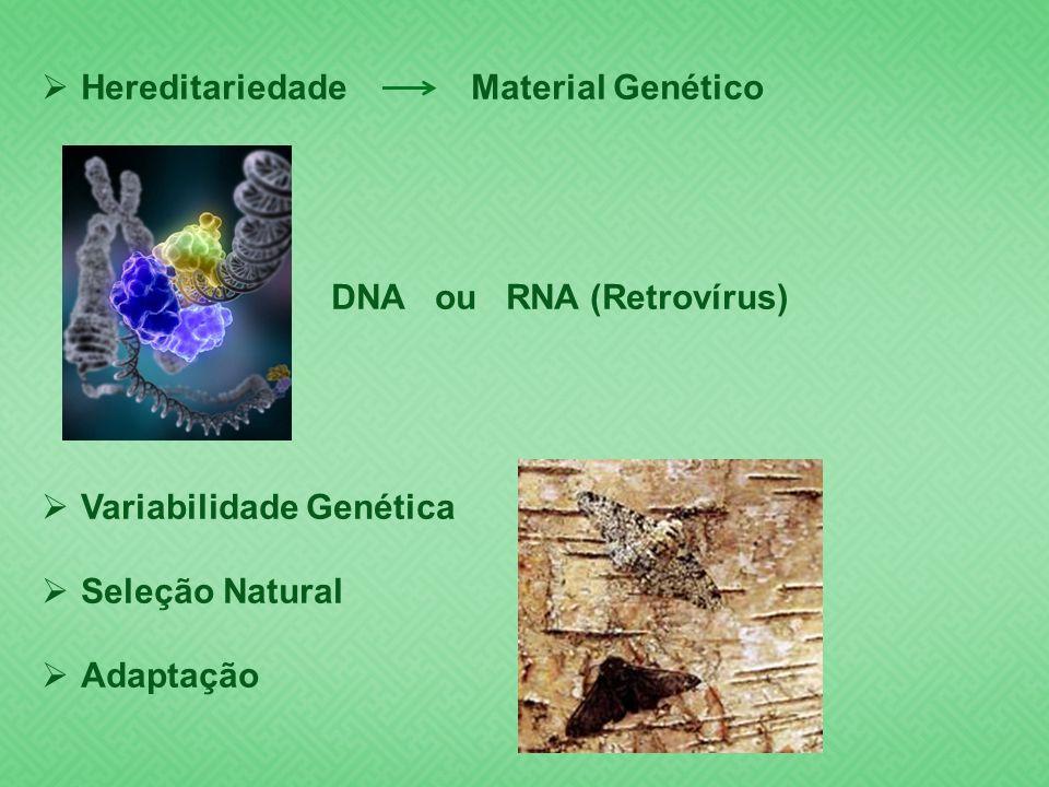 Hereditariedade Material Genético DNA ou RNA (Retrovírus) Variabilidade Genética Seleção Natural Adaptação