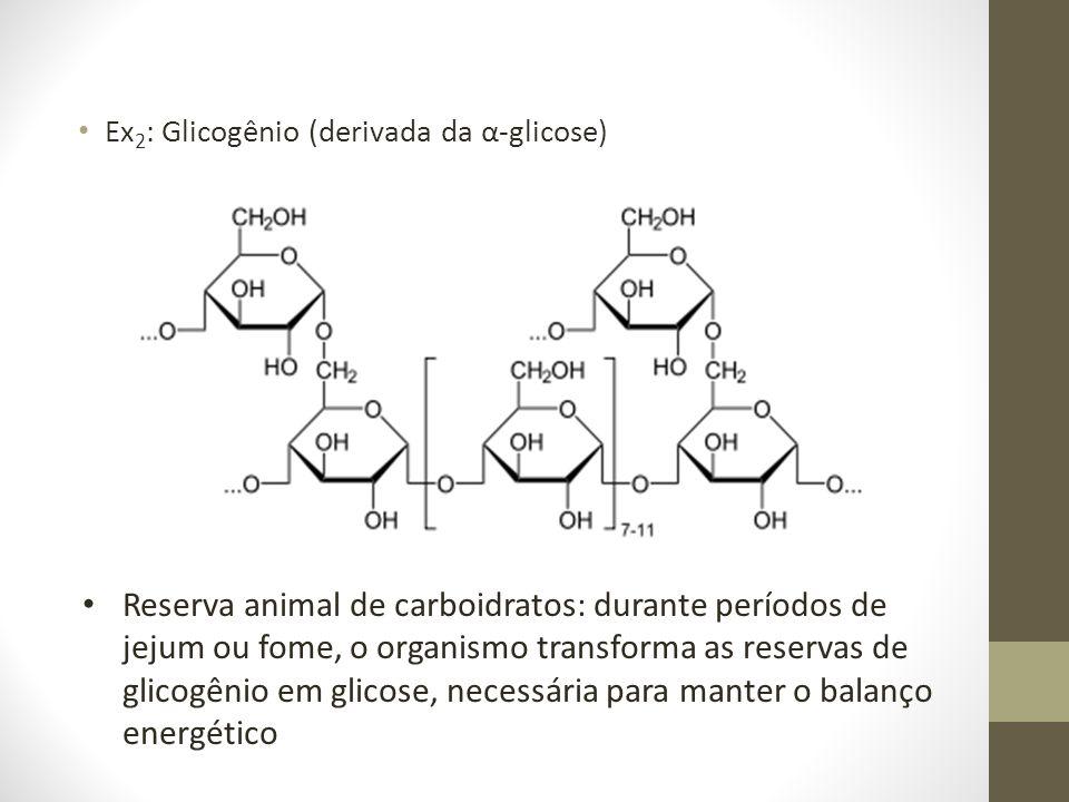 Ex 2 : Glicogênio (derivada da α-glicose) Reserva animal de carboidratos: durante períodos de jejum ou fome, o organismo transforma as reservas de gli