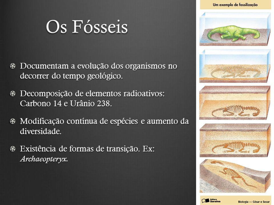 Os Fósseis Documentam a evolução dos organismos no decorrer do tempo geológico.