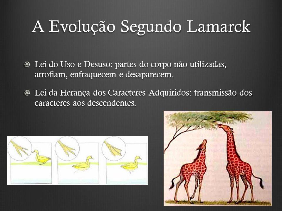 A Evolução Segundo Lamarck Lei do Uso e Desuso: partes do corpo não utilizadas, atrofiam, enfraquecem e desaparecem.