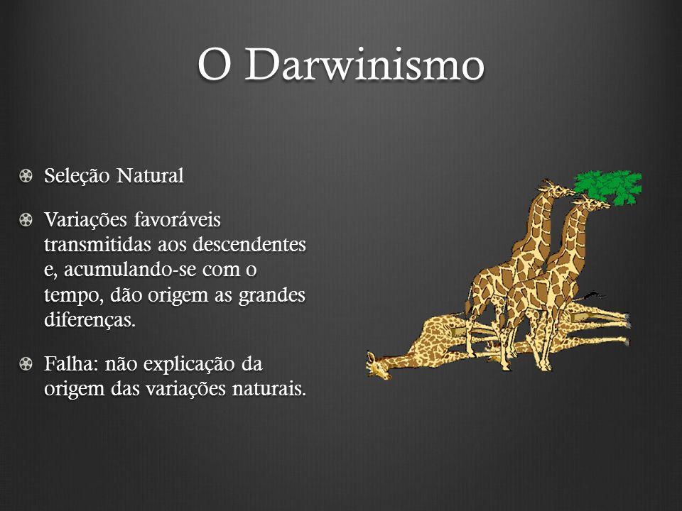 O Darwinismo Seleção Natural Variações favoráveis transmitidas aos descendentes e, acumulando-se com o tempo, dão origem as grandes diferenças.