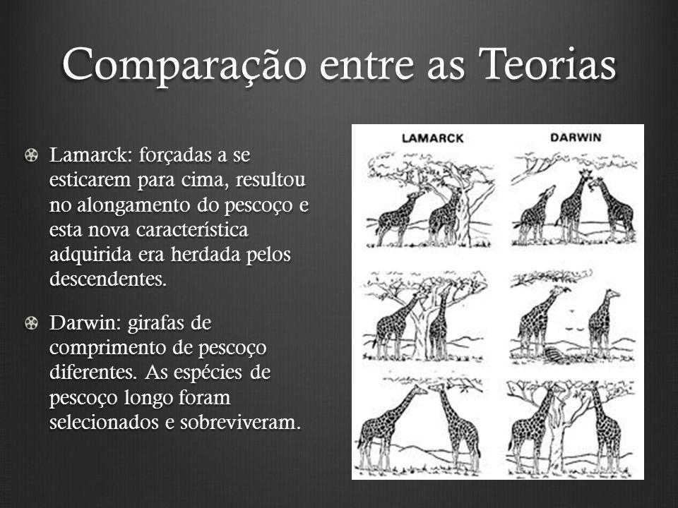 Comparação entre as Teorias Lamarck: forçadas a se esticarem para cima, resultou no alongamento do pescoço e esta nova característica adquirida era herdada pelos descendentes.
