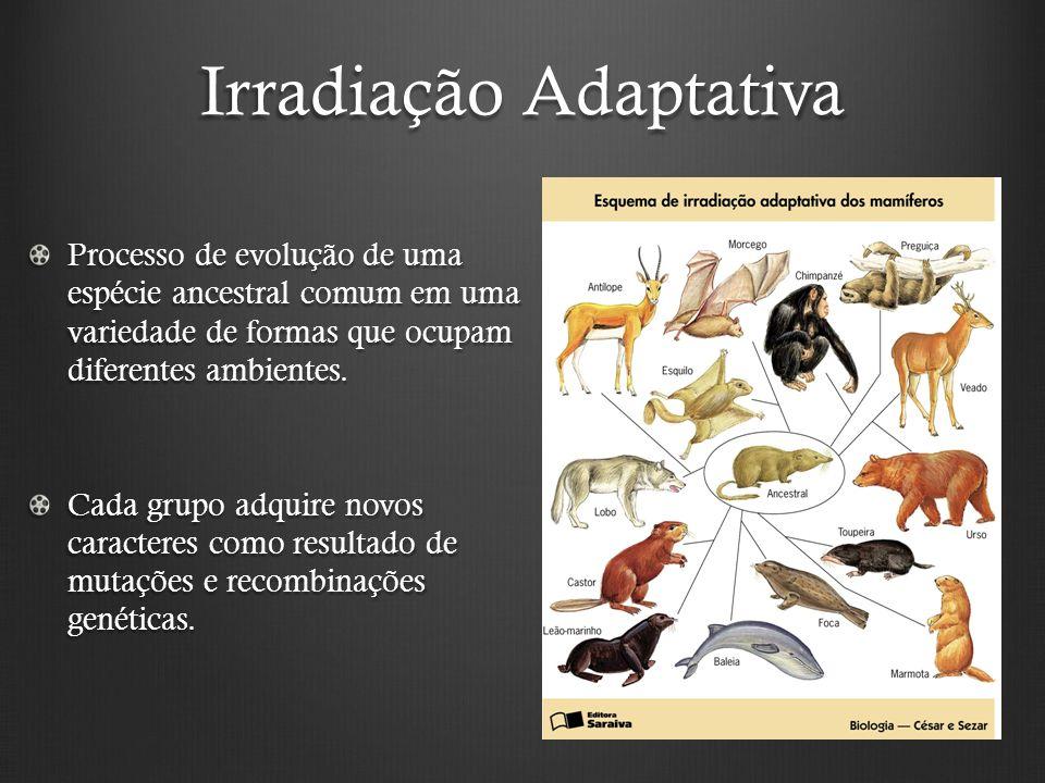 Irradiação Adaptativa Processo de evolução de uma espécie ancestral comum em uma variedade de formas que ocupam diferentes ambientes.
