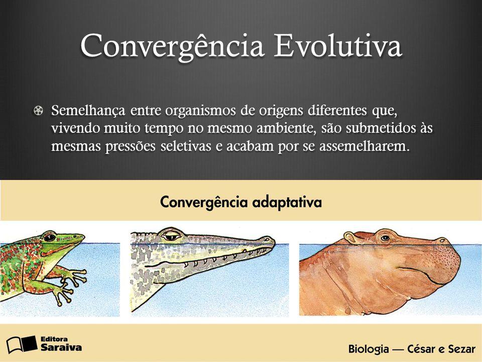 Convergência Evolutiva Semelhança entre organismos de origens diferentes que, vivendo muito tempo no mesmo ambiente, são submetidos às mesmas pressões seletivas e acabam por se assemelharem.