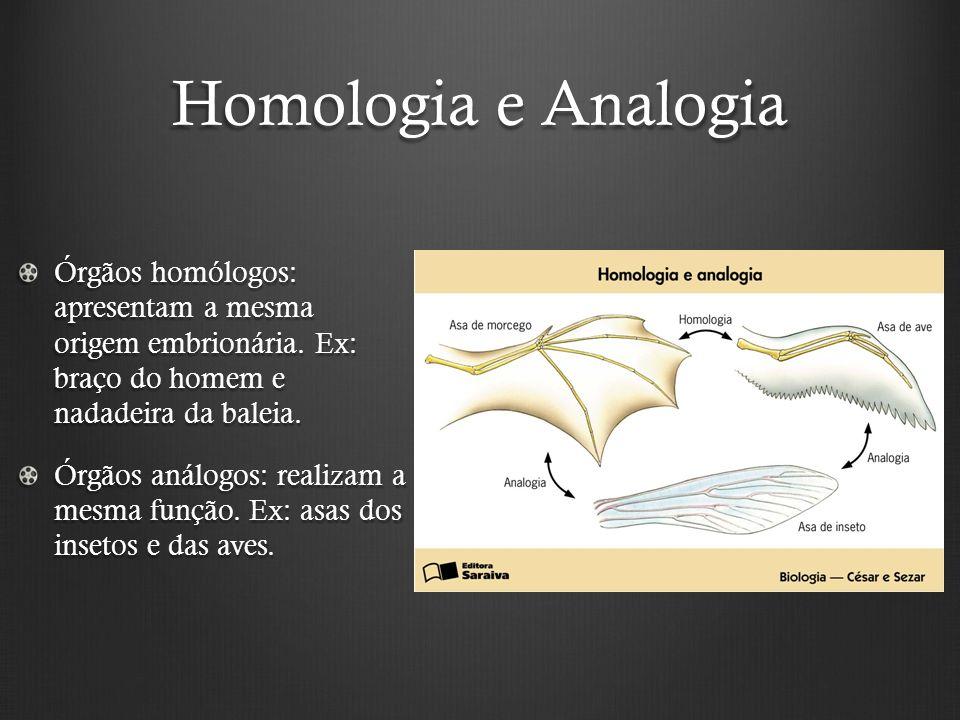 Homologia e Analogia Órgãos homólogos: apresentam a mesma origem embrionária.