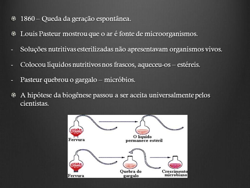 A Especiação Dois tipos: -Alopátrica: população inicial sofre isolamento geográfico, diferenciação genotípica e fenotípica, isolamento reprodutivo, formação de duas espécies diferentes.