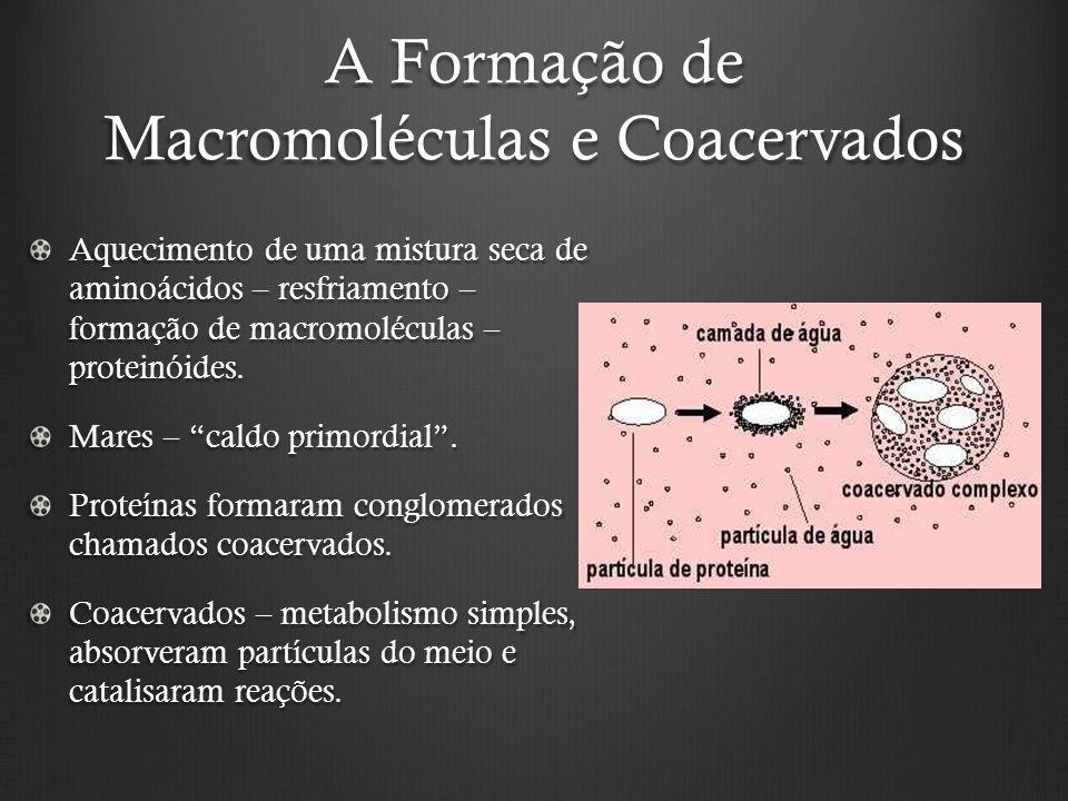 A Formação de Macromoléculas e Coacervados Aquecimento de uma mistura seca de aminoácidos – resfriamento – formação de macromoléculas – proteinóides.