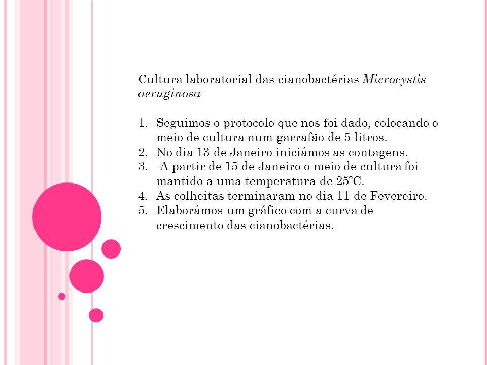 Cultura laboratorial das cianobactérias Microcystis aeruginosa 1.Seguimos o protocolo que nos foi dado, colocando o meio de cultura num garrafão de 5