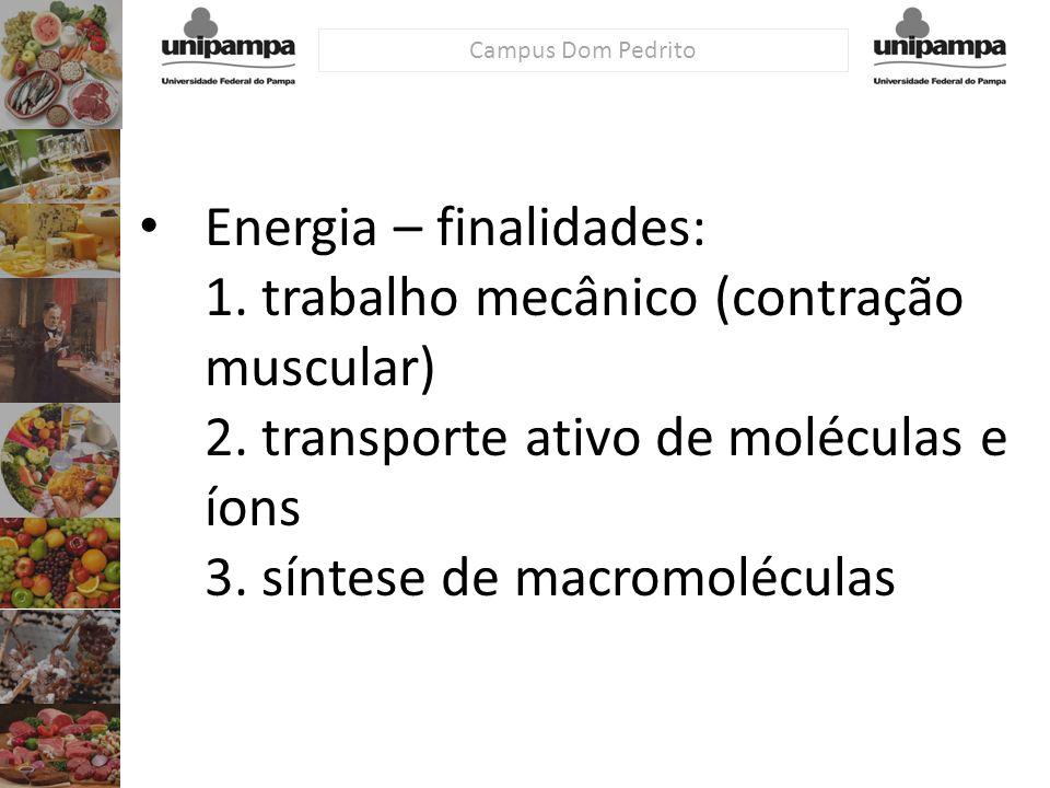 Campus Dom Pedrito Energia – finalidades: 1. trabalho mecânico (contração muscular) 2. transporte ativo de moléculas e íons 3. síntese de macromolécul