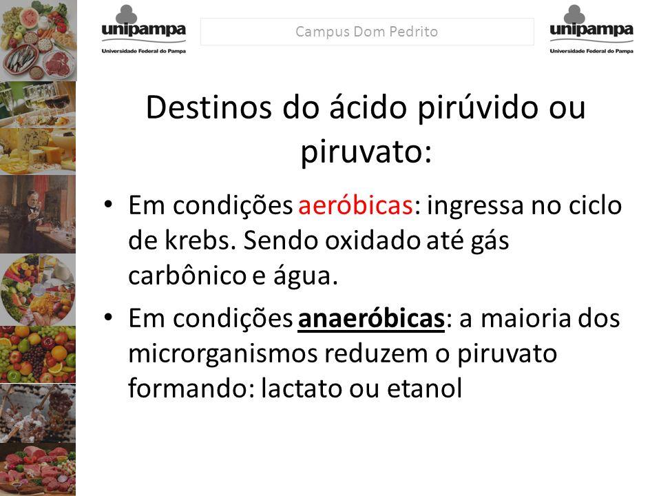 Destinos do ácido pirúvido ou piruvato: Em condições aeróbicas: ingressa no ciclo de krebs. Sendo oxidado até gás carbônico e água. Em condições anaer