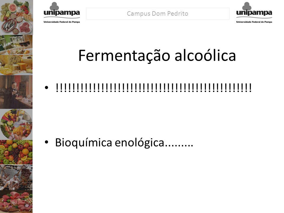 Campus Dom Pedrito Fermentação alcoólica !!!!!!!!!!!!!!!!!!!!!!!!!!!!!!!!!!!!!!!!!!!!!!!! Bioquímica enológica.........