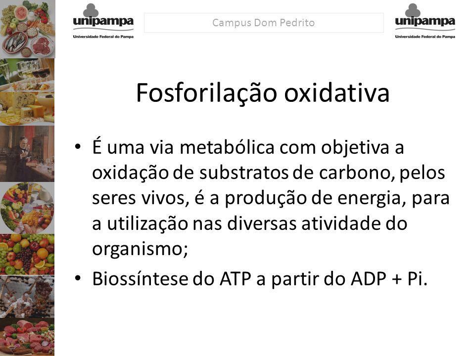 Fosforilação oxidativa É uma via metabólica com objetiva a oxidação de substratos de carbono, pelos seres vivos, é a produção de energia, para a utili