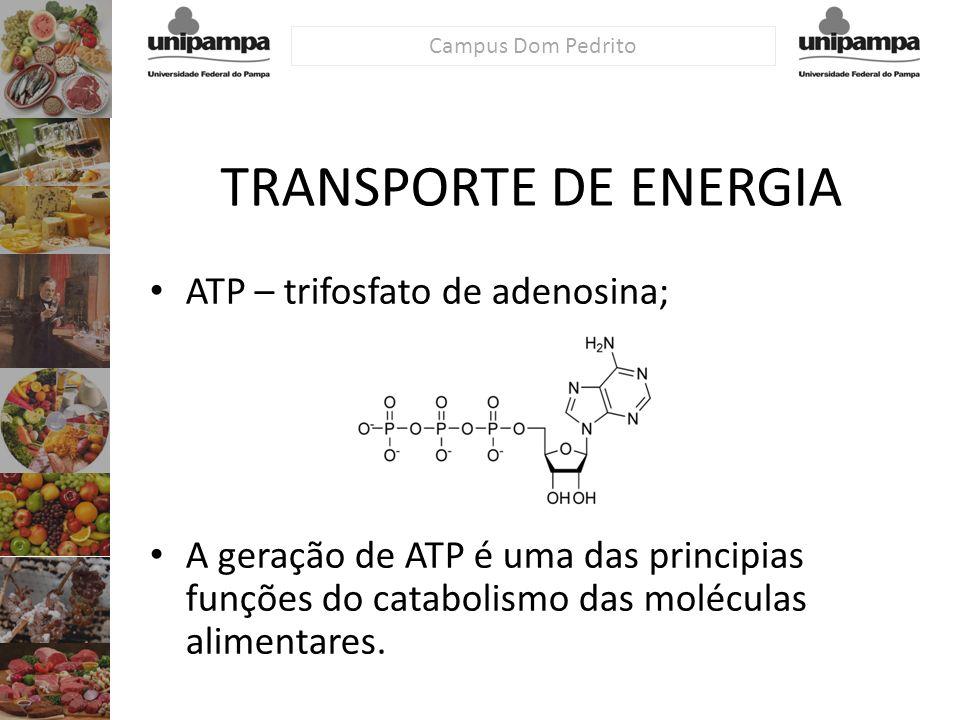 Campus Dom Pedrito TRANSPORTE DE ENERGIA ATP – trifosfato de adenosina; A geração de ATP é uma das principias funções do catabolismo das moléculas ali
