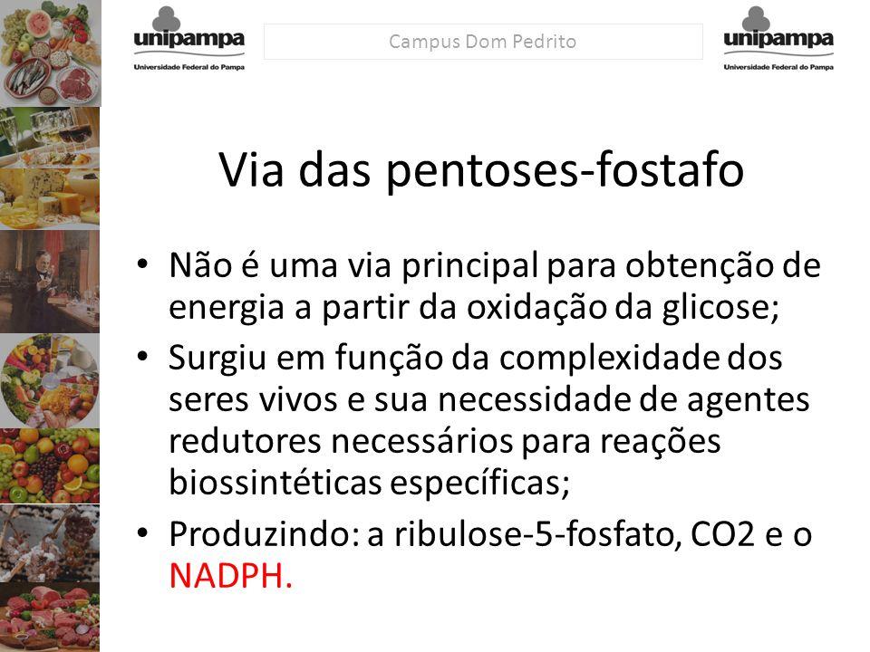 Campus Dom Pedrito Via das pentoses-fostafo Não é uma via principal para obtenção de energia a partir da oxidação da glicose; Surgiu em função da comp