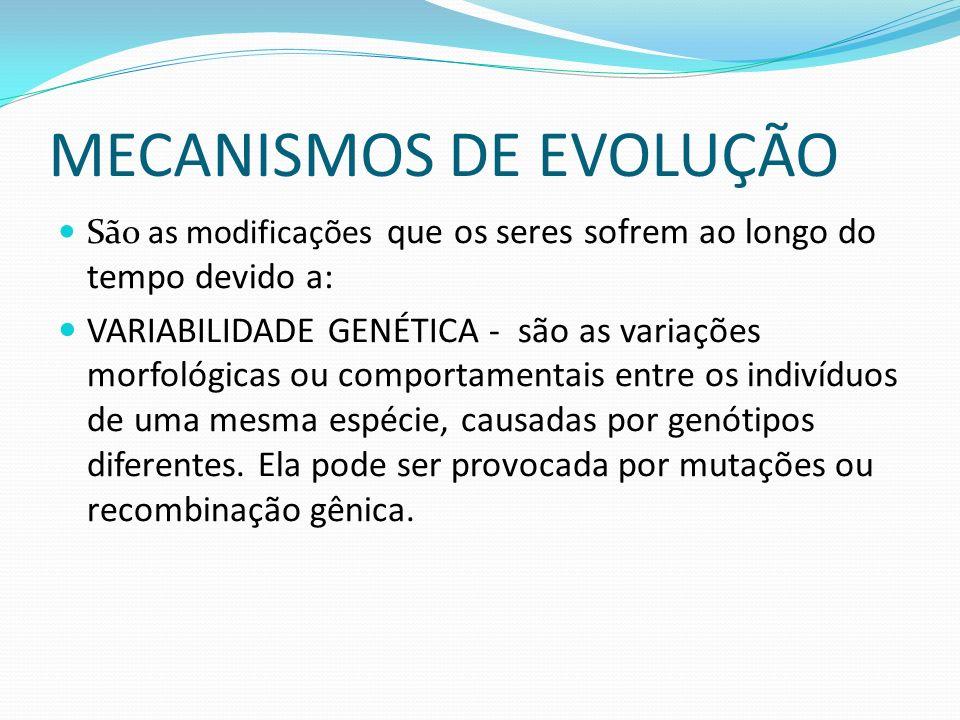 MECANISMOS DE EVOLUÇÃO São as modificações que os seres sofrem ao longo do tempo devido a: VARIABILIDADE GENÉTICA - são as variações morfológicas ou comportamentais entre os indivíduos de uma mesma espécie, causadas por genótipos diferentes.