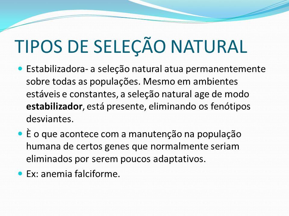 TIPOS DE SELEÇÃO NATURAL Estabilizadora- a seleção natural atua permanentemente sobre todas as populações.